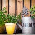 Gemakkelijk kruiden kweken op je terras