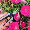 7 tips voor een- en tweejarige zomerbloemen