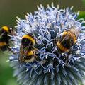 BIJzondere insecten in de tuin