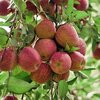 4 tips om fruit te bewaren