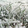 Het gazon voorbereiden op de winter