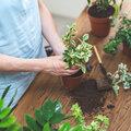 Het geheim van gezonde kamerplanten