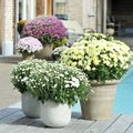 12 najaarsplanten die kleur brengen op je terras