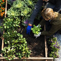 Lekkere groentjes kweken in het najaar