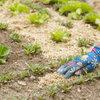 Een nieuw assortiment bodembedekkers