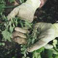 Onkruid voorkomen en bestrijden met Herbistop