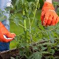 Planten ondersteunen: tips bij regen en wind