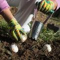 Praktijklessen voor kleur in de tuin