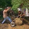Struiken en bomen verplanten