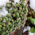 Hoe je terrasplanten beschermen tegen vorst?