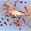 Top 10 vogelvriendelijke planten