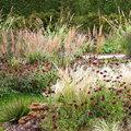 Tuinidee de prairietuin