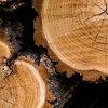 Veelgestelde vragen bij de aankoop van houten tuinproducten