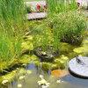 Voorkom algen in de vijver