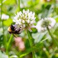 Wilde bloemen tellen in het gras