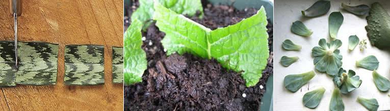 Planten vermeerderen door stekken