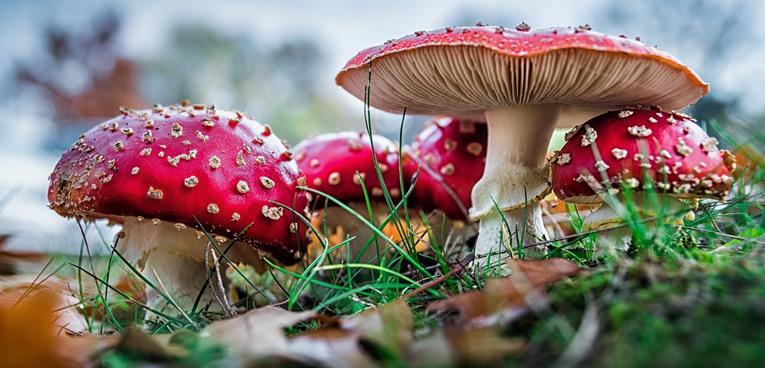 soorten paddenstoelen