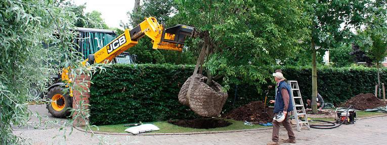 Tuin aanleggen met volwassen bomen