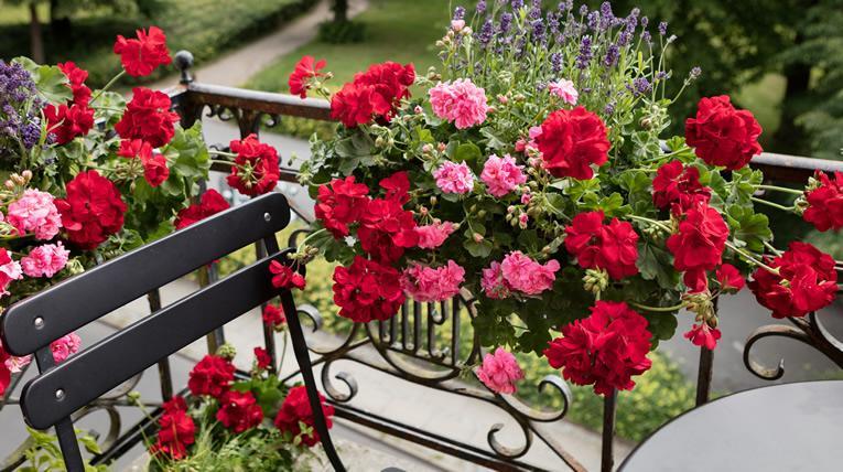 Vanaf april is het weer tijd voor balkonplanten