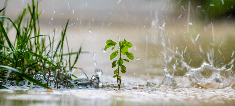 tips bij hevige regen