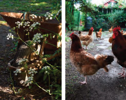 Ecologisch tuinieren