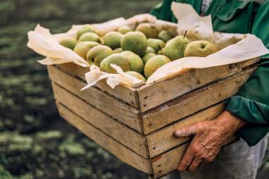 Zelf peren kweken