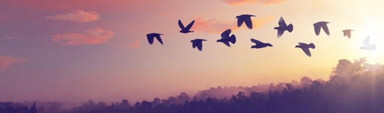 trekvogels op zoek naar een overwinteringsplaats