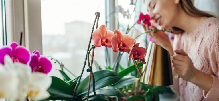 Orchideeën verzorgen