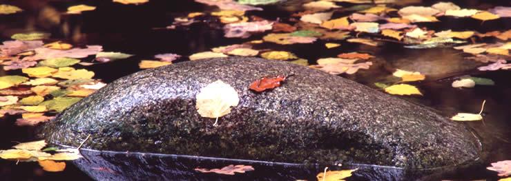 Herfstbladeren in de vijver