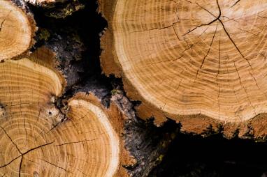 Natuurlijke barsten en scheuren in hout