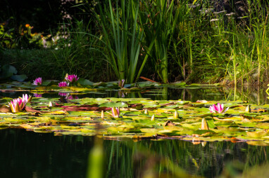 Vijver met divers overplanten en waterlelies