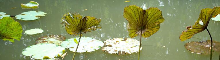 Groene vijver