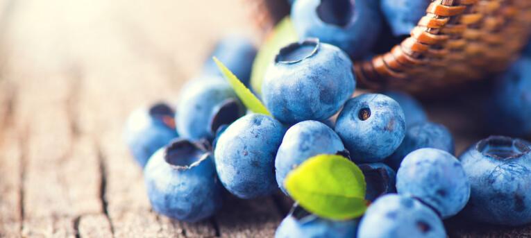 Blauwe bessen