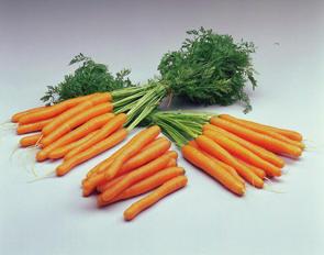 Teelt wortelen