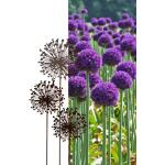 Allium Ø 30 cm - decoroest