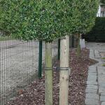 Tree-fix boombinder 23 cm