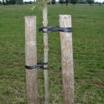 Tree-fix boombinder 50 cm/15 mm (10 stuks)