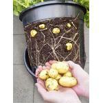 Aardappelpot - PotatoPot - 12 liter