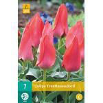 Tulp Trauttmansdorff (7 stuks)