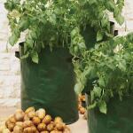 Aardappel kweekzak groen