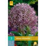 Allium christophii - sierui (3 stuks)