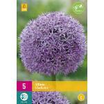 Allium Gladiator - sierui