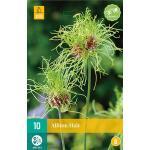 Allium Hair - sierui (10 stuks)