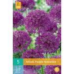 Allium Purple Sensation - 5 stuks (5 stuks)