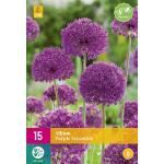 Allium Purple Sensation - 15 stuks