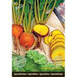 Bieten Burpees Golden (special) Beta vulgaris