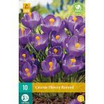 Crocus Flower Record - grootbloemige krokus