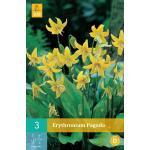 Erythronium pagoda - Hondstand