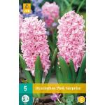 Hyacint Pink Surprise - hyacint roze (5 stuks)