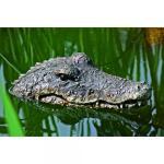 Krokodil drijvend - 30 cm